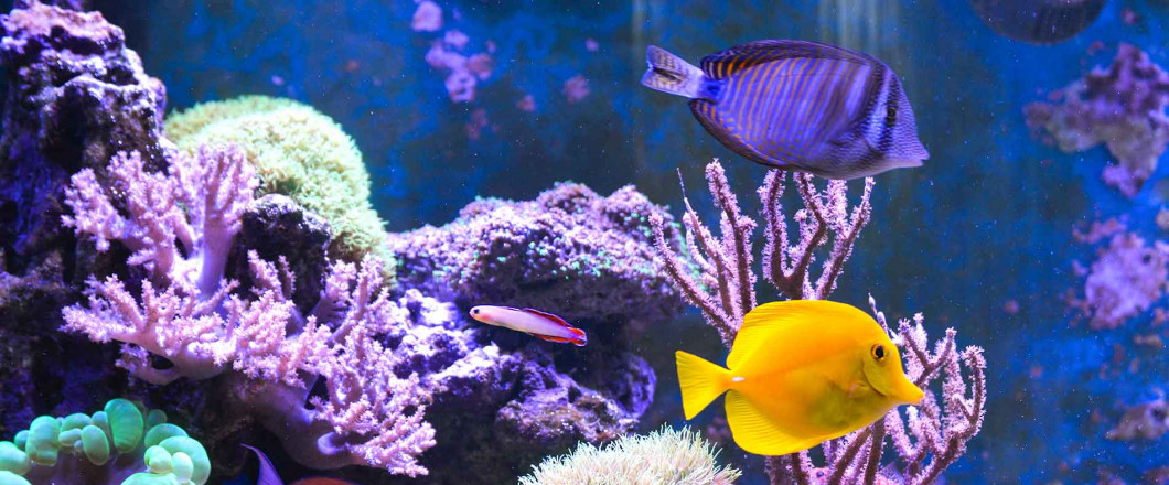 Build a Thriving Aquarium Today