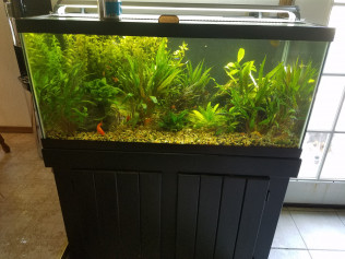 Planted 40 Gallon Freshwater (Tank installed by TSAQ for Customer