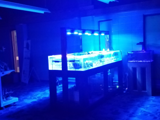 180 gallon Frag tank with the store lights off