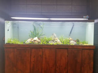 Old version of the 125 gallon planted display