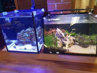 FW and SW Shrimp Nano display