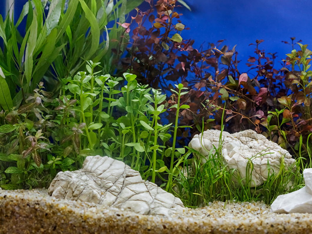 Come see our great selection of aquatic plants and animals